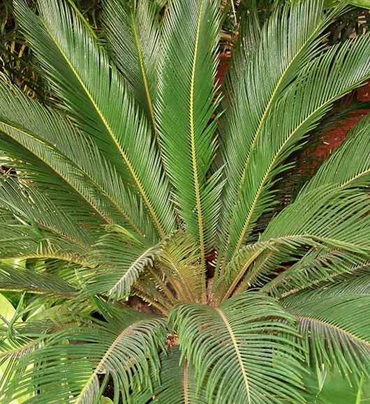 Adult Plants 15