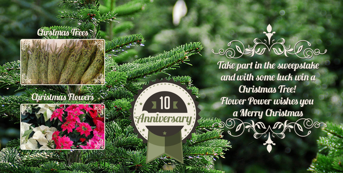 Christmas Tree Flower Power : Flower power garden centre participate and win a