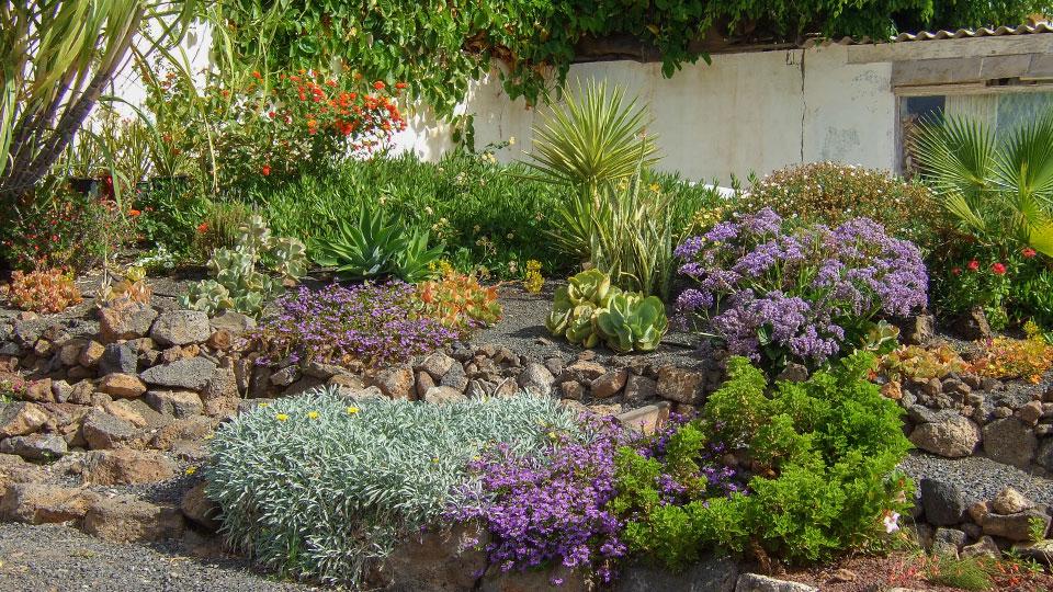 Flower power centro de jardiner a mantenimiento - Jardin sin mantenimiento ...